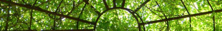 cropped-cropped-dscn00891.jpg